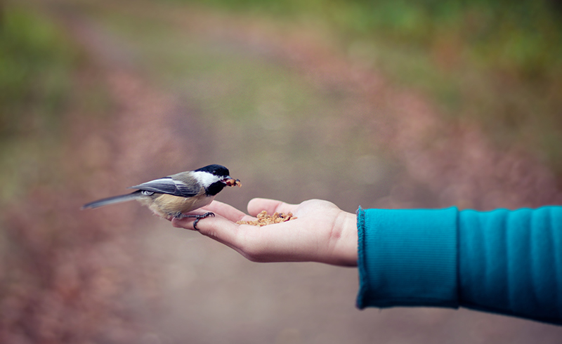 De kleine goedheid' van Levinas – dekleinegoedheid